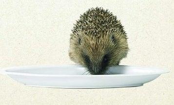 The Hedgehog's Dilemma