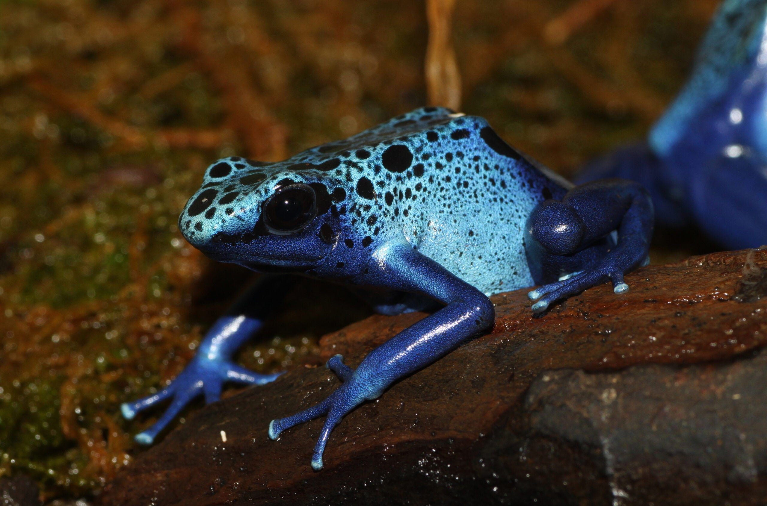 An Ice-Proof Coating For Airplanes Based On A Frog's Skin