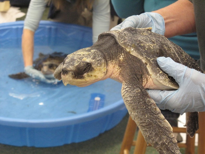 Now climate change is coming for our sea turtles