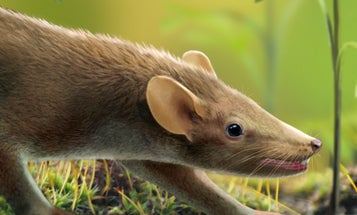 Fossilized Mammal From Age Of Dinosaurs Had Spiky Hair