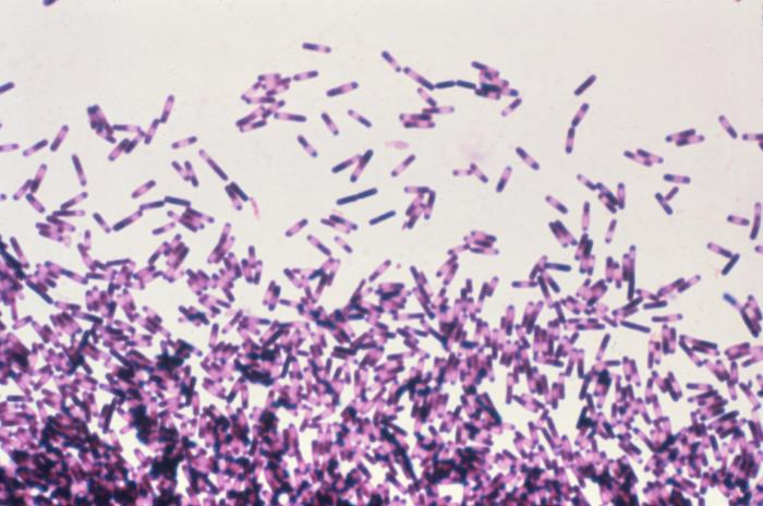 Infamous Diarrhea-Causing Infections Nearly Double In U.S. Hospitals
