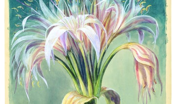 Behind the scenes of the most beautiful botanical sketches