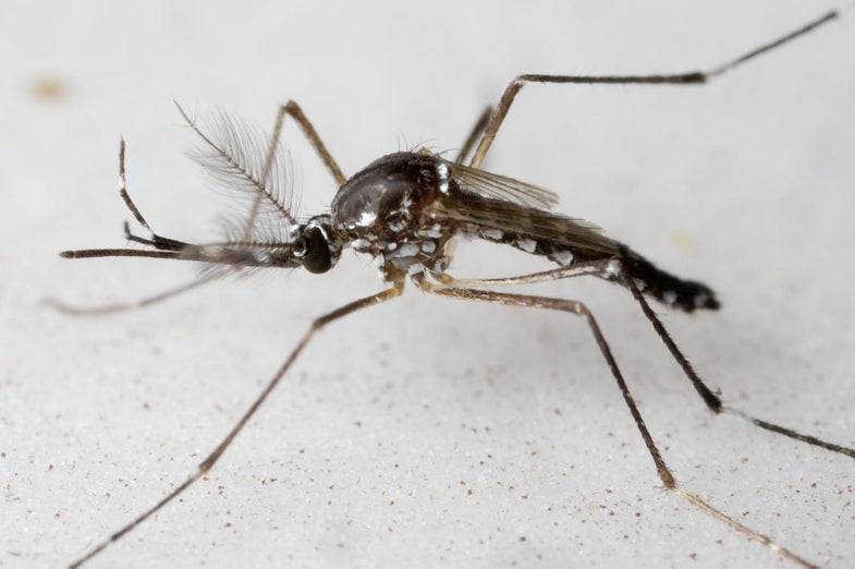 a mosquito on a white background