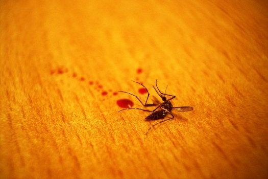 FYI: How Do Mosquitoes Survive Rainstorms?