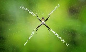 Add Graphene To Spider Silk To Create The Strongest Fiber Yet