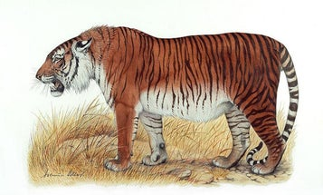 Scientists want to give the world a second chance at Caspian tigers
