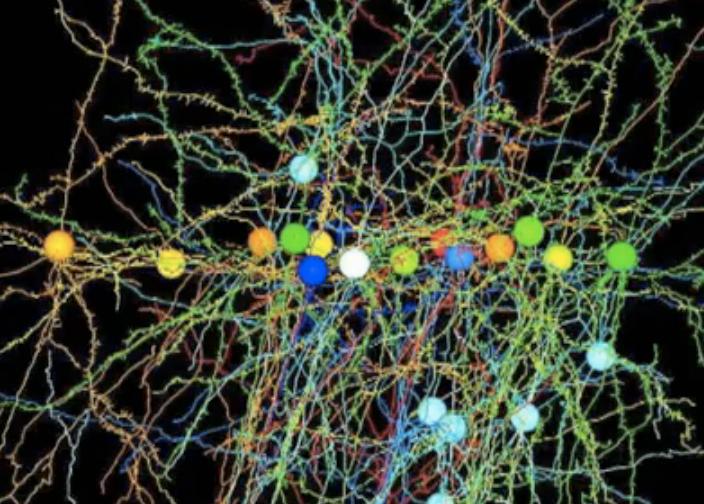 New Model Lets Researchers Crawl Through Virtual Brain Networks