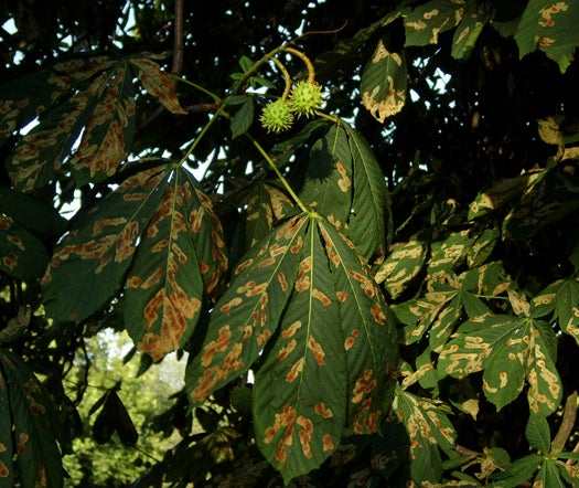 Evidence of First Virus That Infects Both Plants and Humans