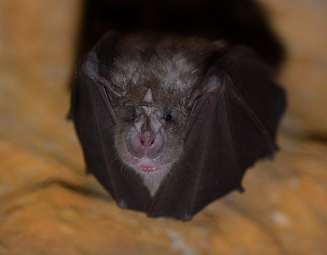 How Bats Find Their Way Through The Clutter