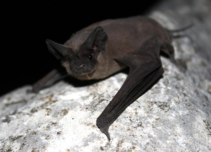 This Halloween, Celebrate The Beautiful Bat