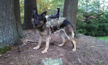 Cerberus Turns Military Dogs Into Cyborgs