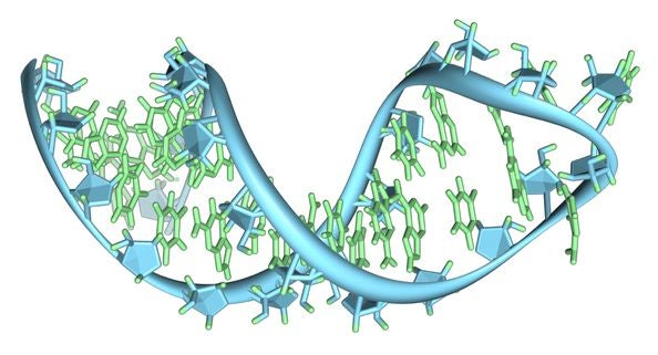 Genetic Bar Code Search Can Use RNA to Pick Out Individuals From Huge Gene Pools