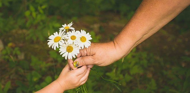 offering daisies