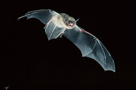 PopSci BatSci: Biologists Use Old Weather Data to Track Bat Signals