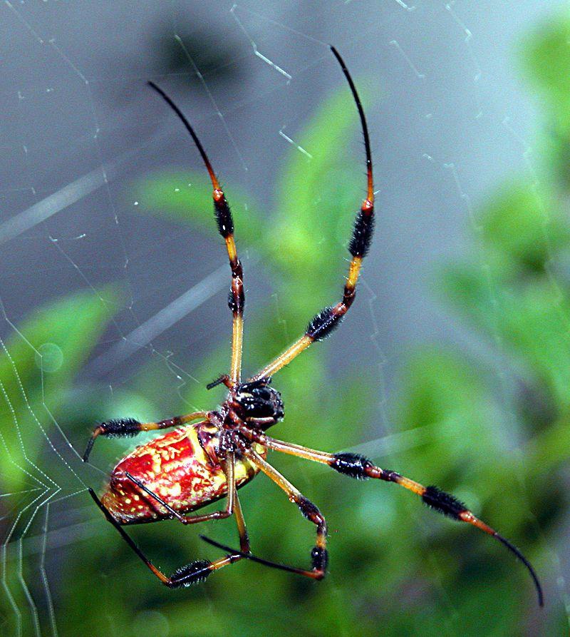 """""""Spider"""