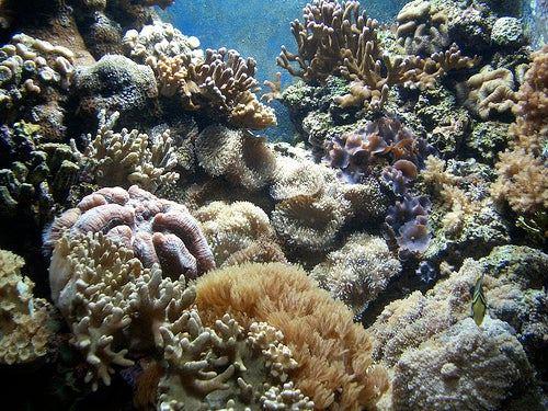Ocean pH and the Fate of the Food Chain