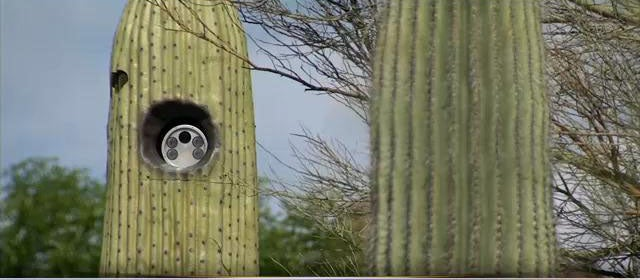 Arizona Town Hides License Plate Readers In Cacti