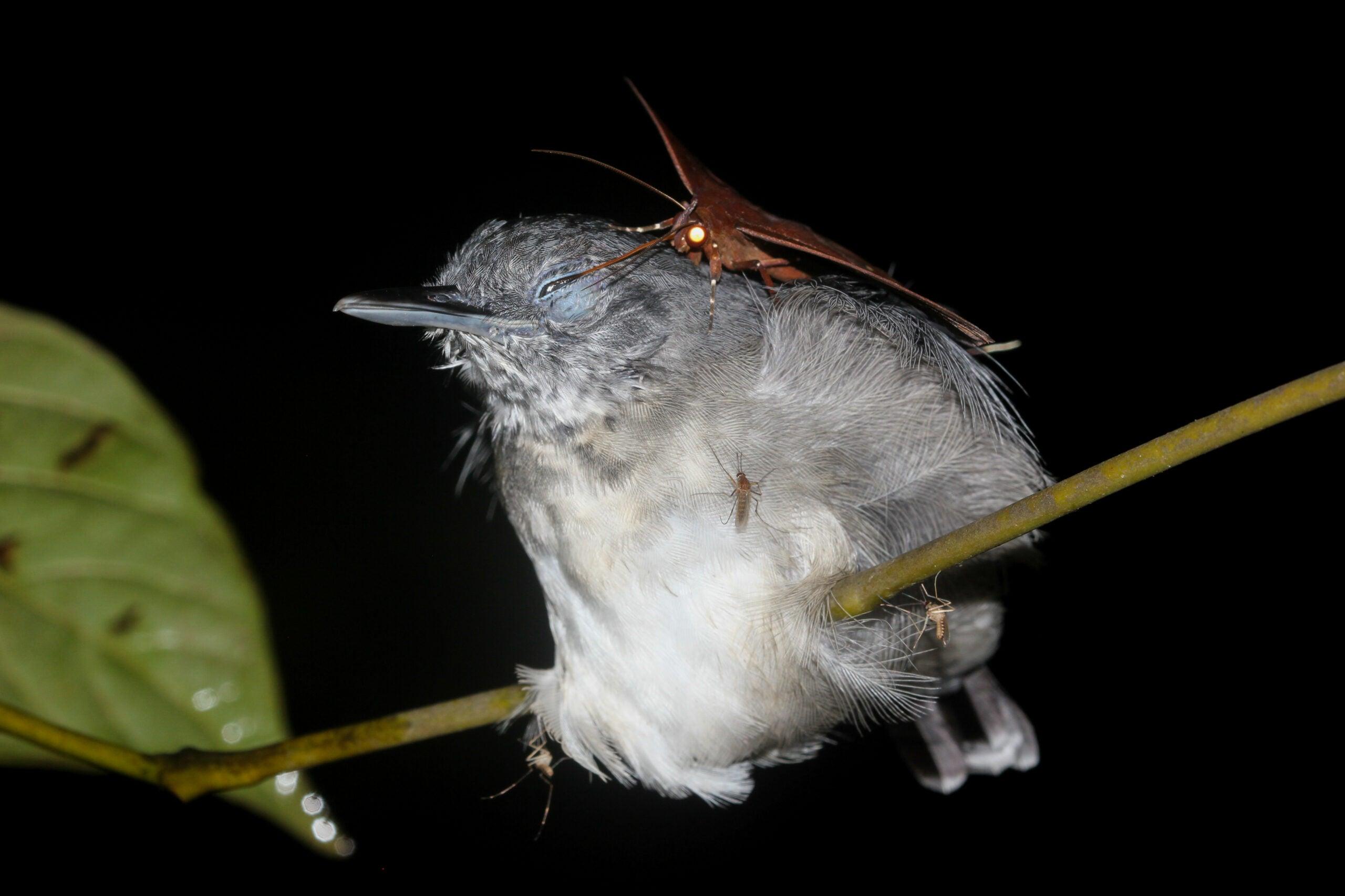 Megapixels: A moth drinks tears from a bird's eye