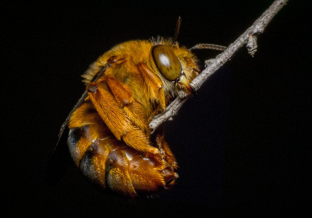 Do Insects Sleep?