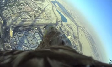 Eagle Films Flight From World's Tallest Building, Sets Record [Video]