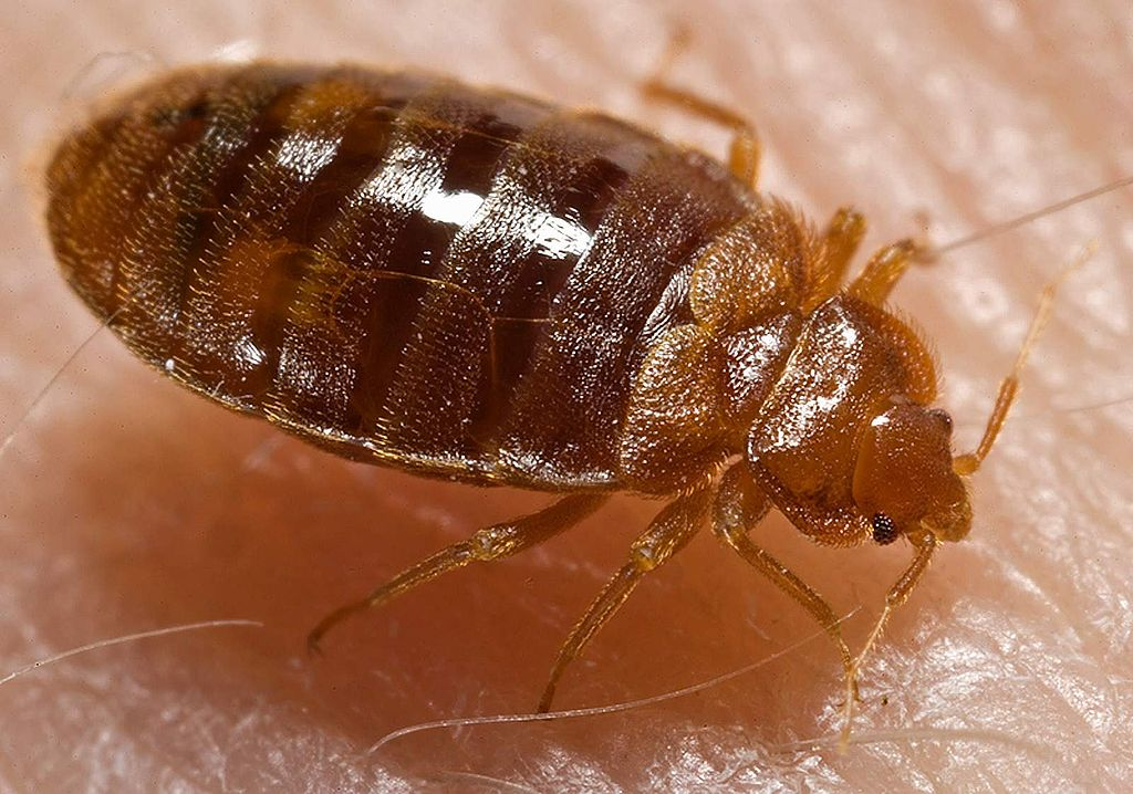 Bed bugs!