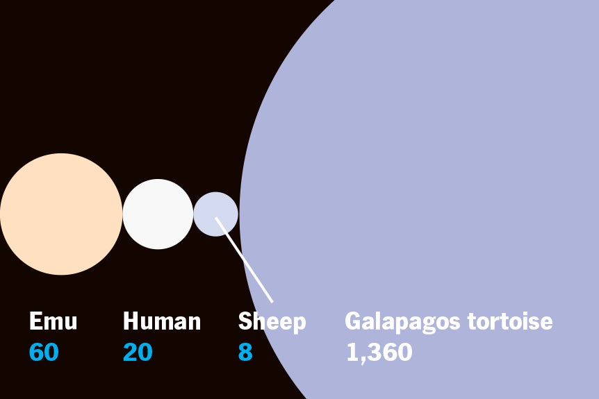 Which Animals Can Have The Most Babies? [Infographic]
