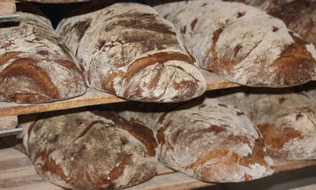 Half of your bread's environmental impact comes from fertilizer