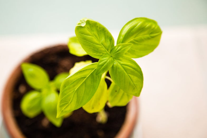 Gifts that grow (even without a green thumb)