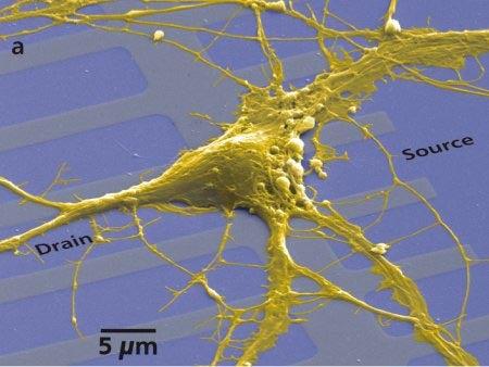 New Neurochip Listens Closer Than Ever To Brain Cells Communicating