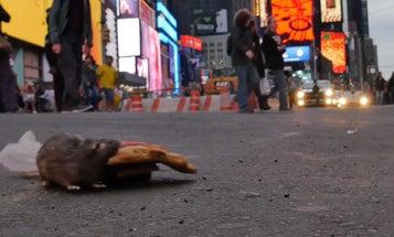 Pizza Rat Robot Terrifies New Yorkers