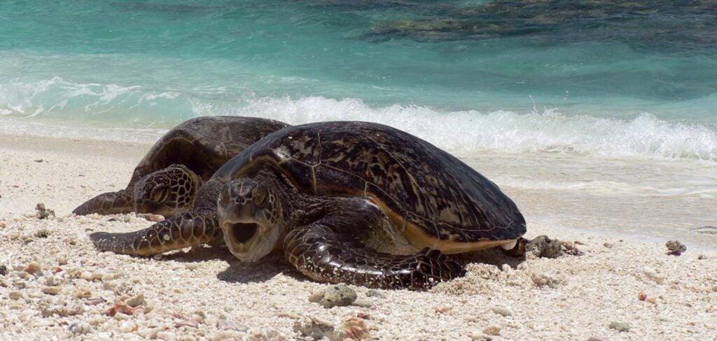 """""""Turtles"""