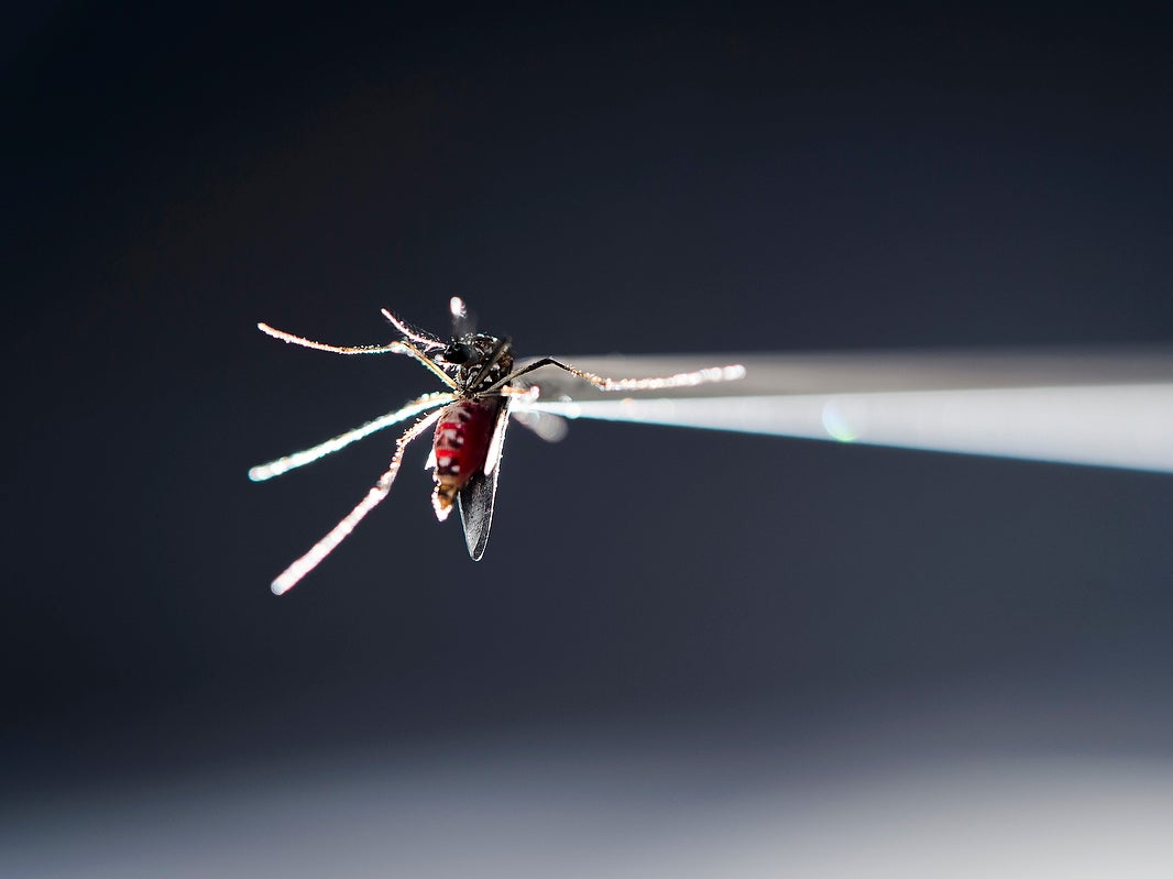 New Zika Study Results Could Help Design A Vaccine