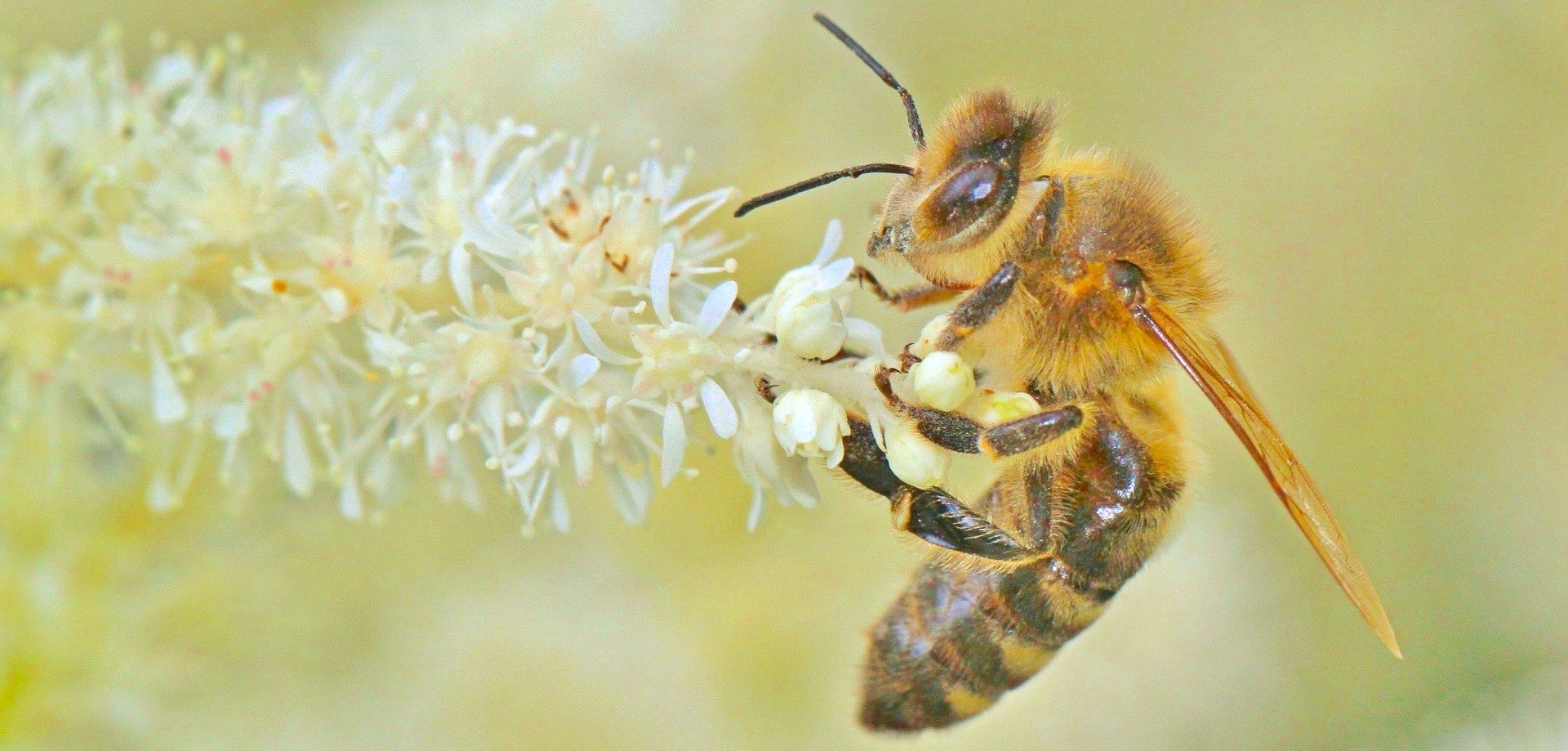 The bees behind your morning coffee might be in big trouble