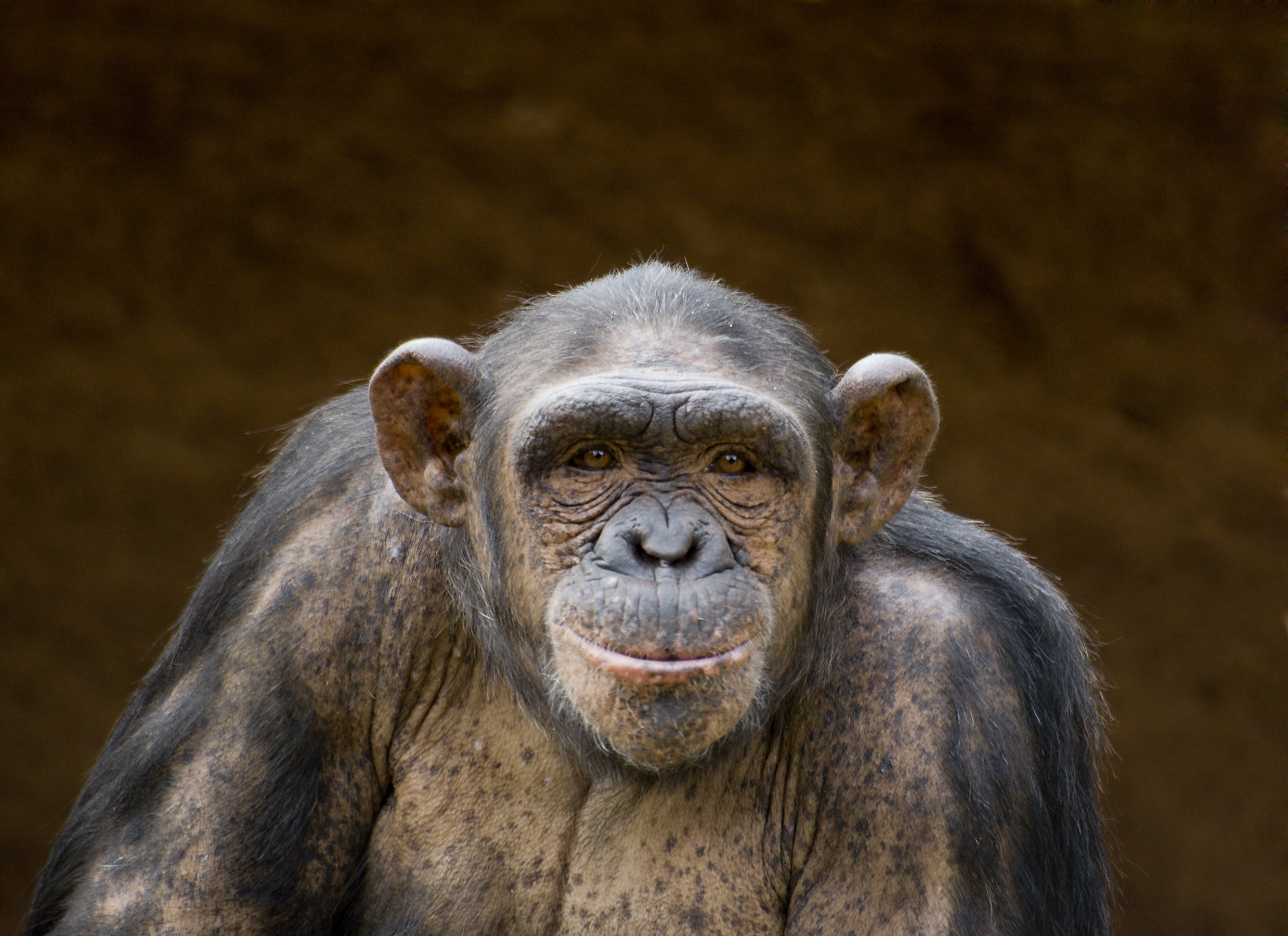 Yes, humans are still evolving. Here's how you can tell.