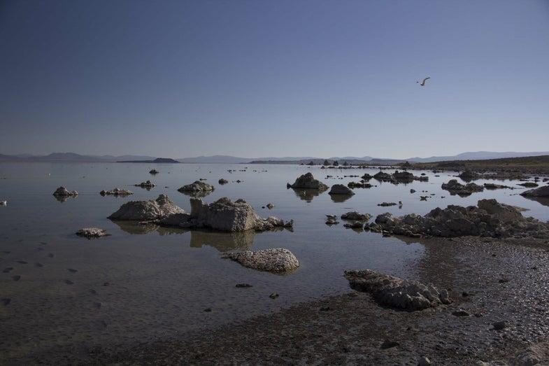 Shoreline of Lake Mono