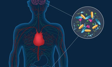 Gut microbes may play a role in Parkinson's disease