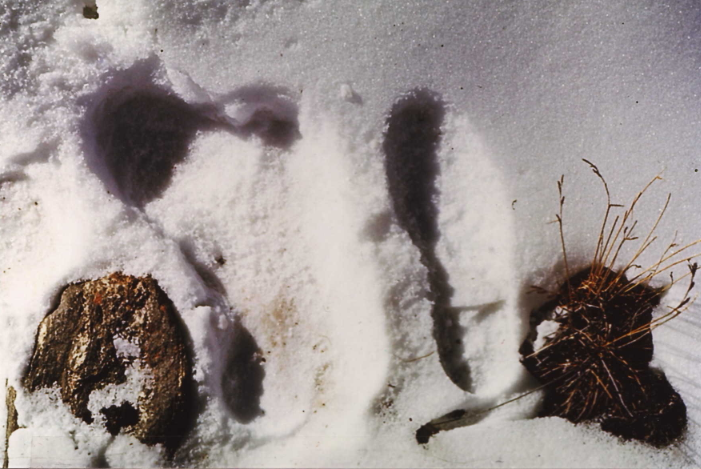 Oxford Launches New Hunt for Yeti DNA Samples