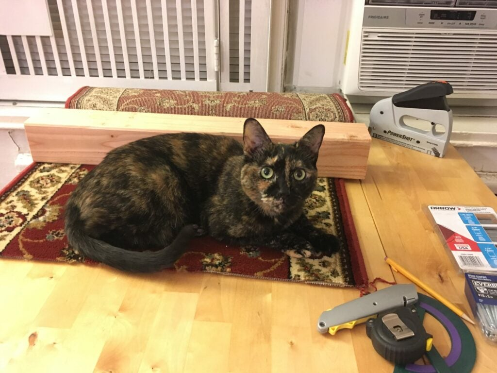 cat and tools