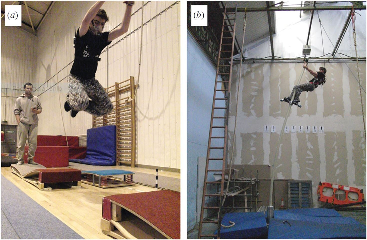 Parkour athletes act like orangutans for science