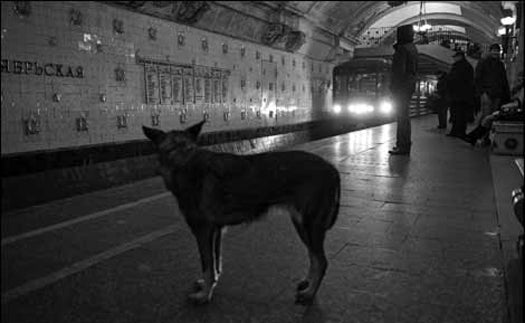 Moscow's Stray Dogs Evolving Greater Intelligence, Including a Mastery of the Subway
