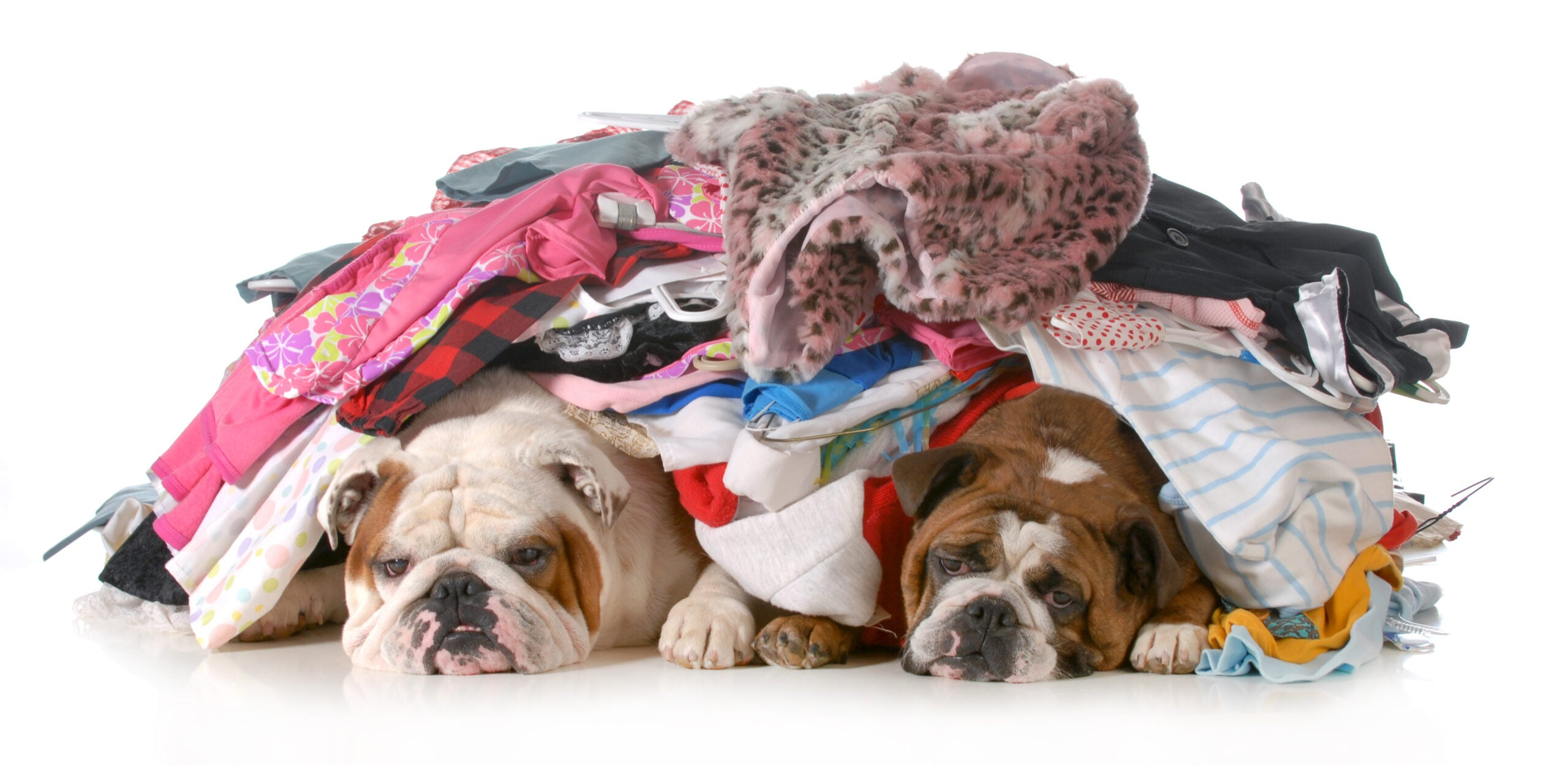 dogs in pile of dirty laundry