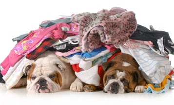 Bad news: Bed bugs like the smell of your dirty laundry