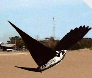 It's a bird! It's a plane! It's … Robofalcon!