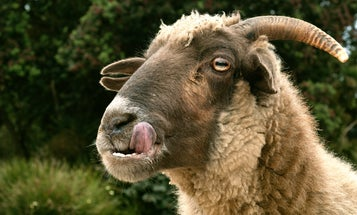 6 vegetarian animals we never suspected would have a taste for blood