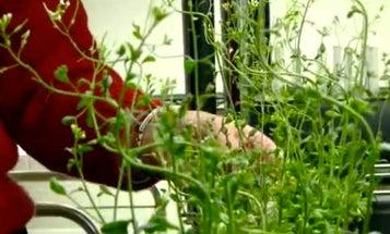 Ferns Versus Terrorists: Engineered Proteins Turn Airport Plants Into Bomb Detectors