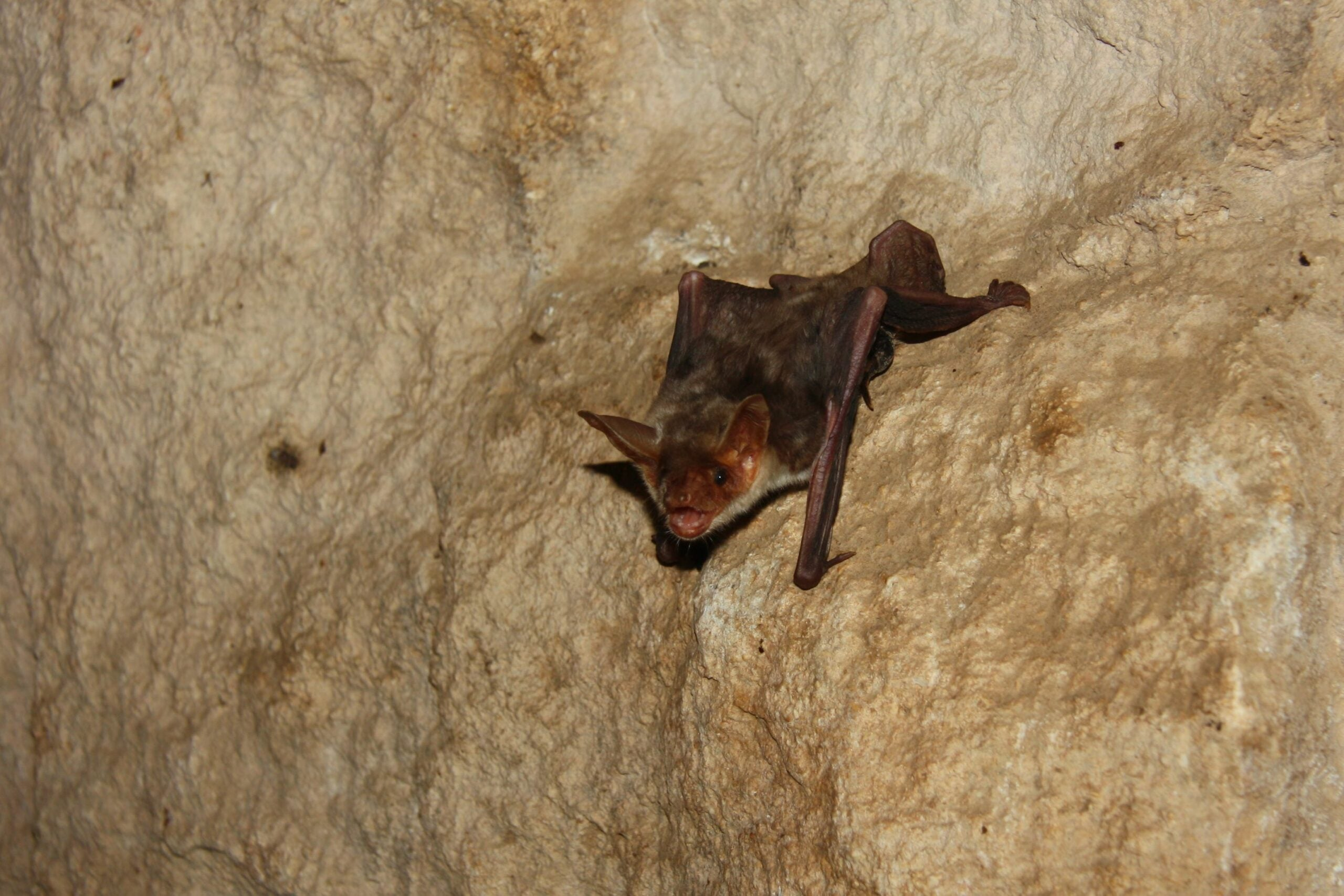 Far From Blind, Bats Use Polarized Light to Find Their Way
