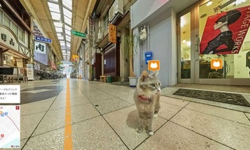 Japan Made The World's First-Ever Cat Street View