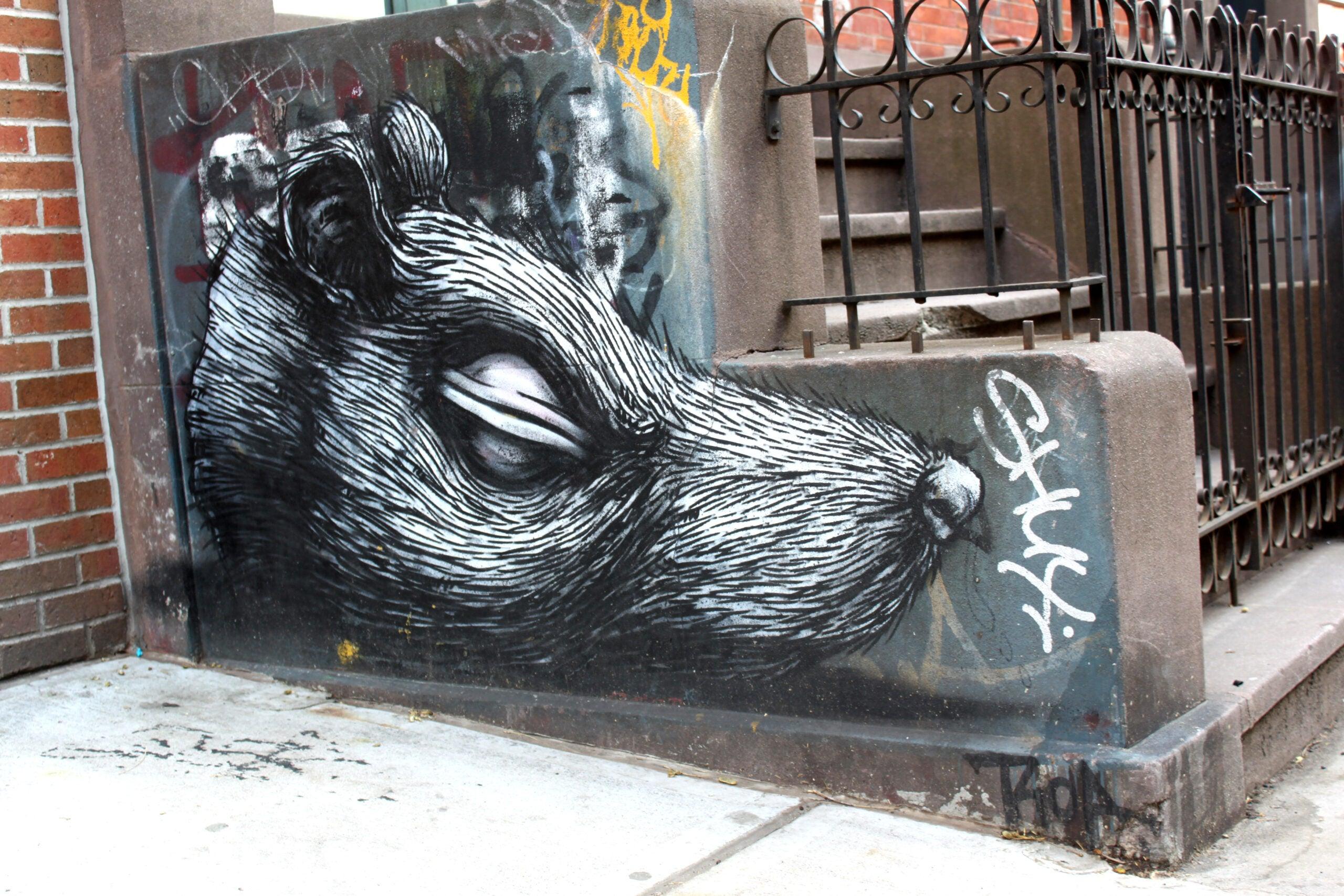 Plague-Associated Fleas Found On New York City Rats