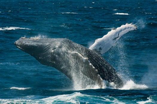 """""""whale"""