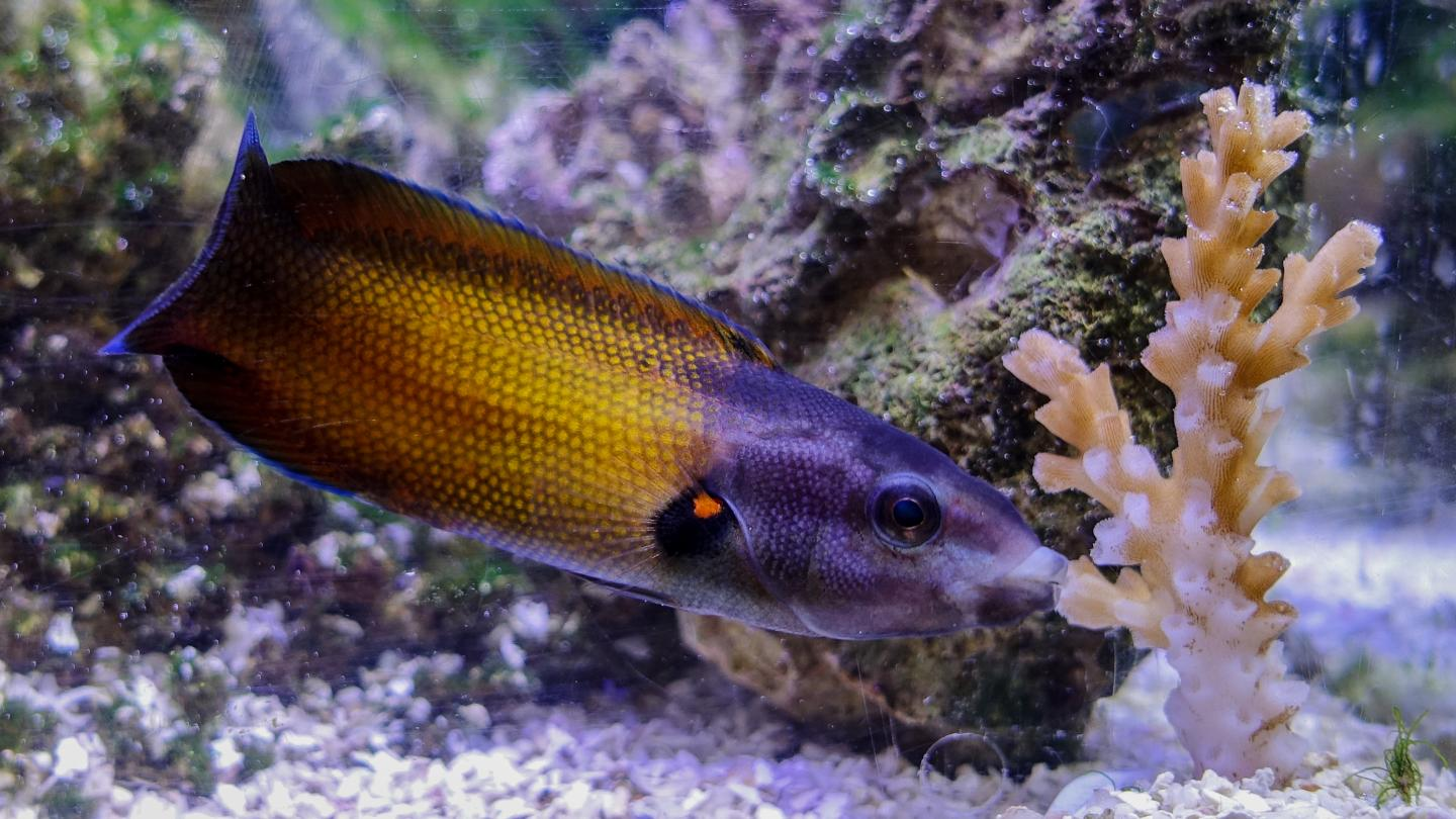 Slimy, fleshy lips dripping with snot help these fish eat stinging corals